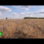 Ущерб сибирских аграриев от сильнейшей за 10 лет засухи оценивается в миллиард рублей