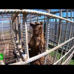 Зоозащитники ищут средства на удобный вольер для бурого медведя Кузи