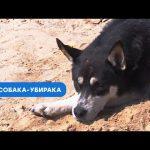 Бездомная собака научилась убирать за людьми
