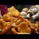 Как заработать миллионы на грибах