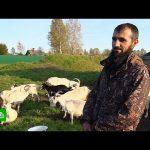 Переселенцы из Таджикистана помогли возродить вымирающее тверское село