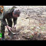 Охота за сокровищами: как работают кладоискатели в России