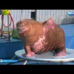 Единственный в Петербурге дельфинарий закрылся