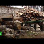 В Курской области пресекли незаконную вырубку вековых дубов