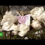 Легкие деньги: в Германии тестируют влияние безусловного базового дохода