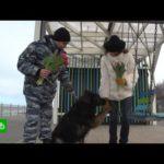 В Калининграде женщин с 8 Марта поздравили кинологи с собаками